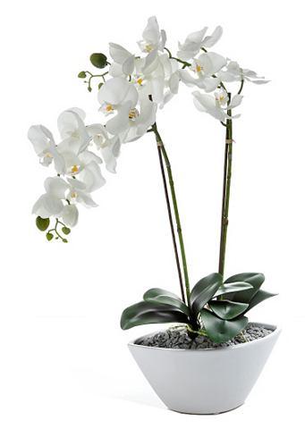 Deco-orchidee in schaal van keramiek
