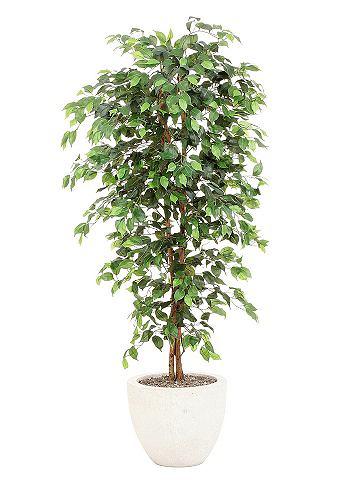 Kunstplant Ficus Benjamini