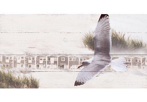 Artprint op hout 'Meeuw', afm. 100x50 cm