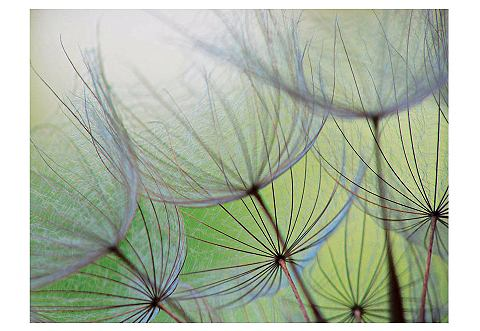 Glazen artprint, Artland, 'Dandelion Seed', afm. 60x80 cm